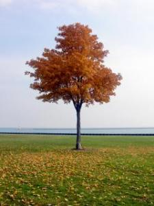 tree, lone tree,