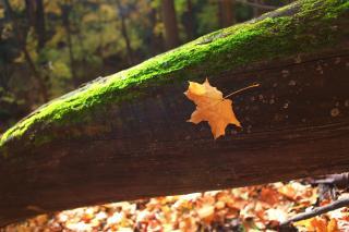 fal colors, fall