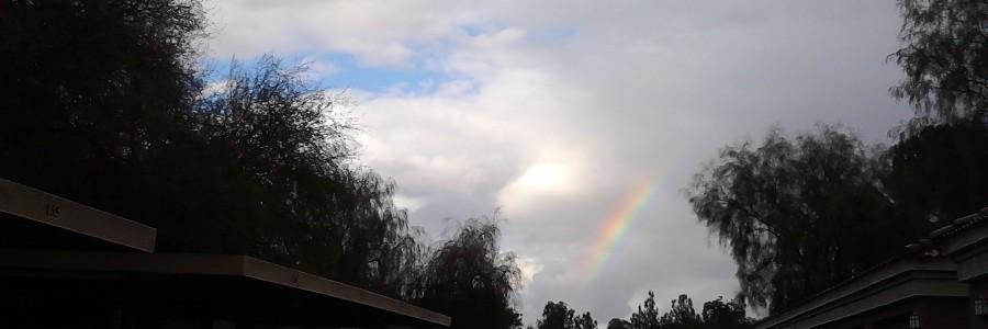 rainbow, unique