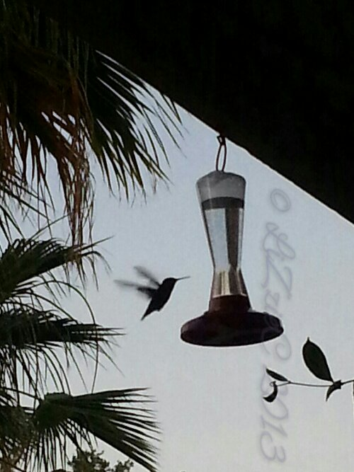 image fleeting, hummingbird,